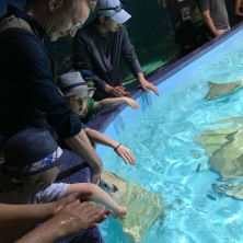 Feeding Manta Rays